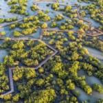 Jubail Mangrove Park_© Jubail Island (5)