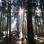 wood-1753825_640